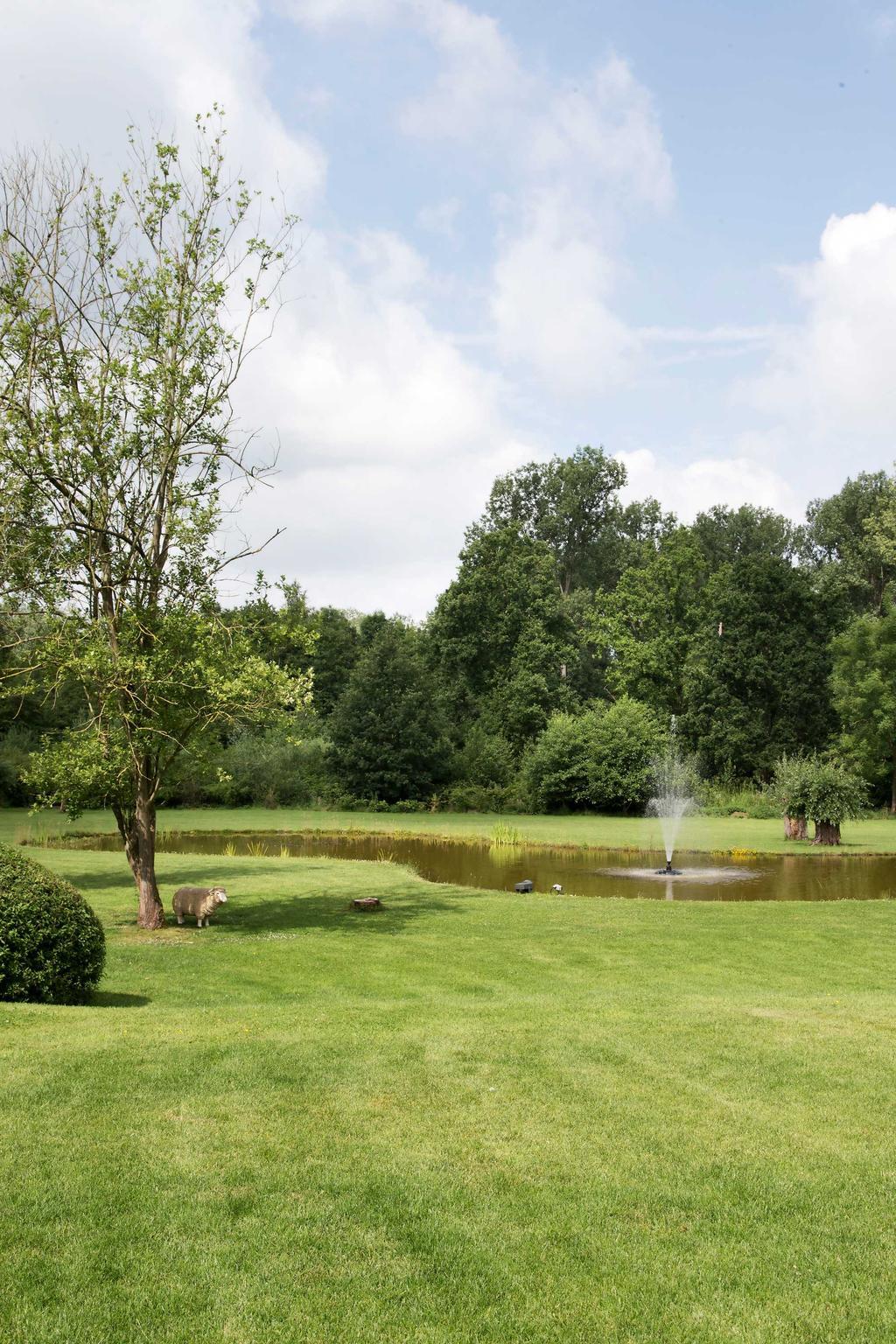 natuurlijke vijver tuin