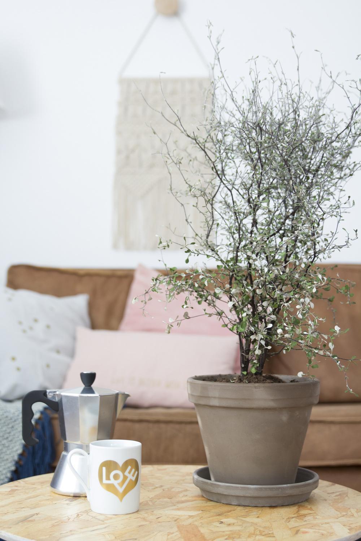 Koffiemok en plant in het voorjaarshuis van Elske