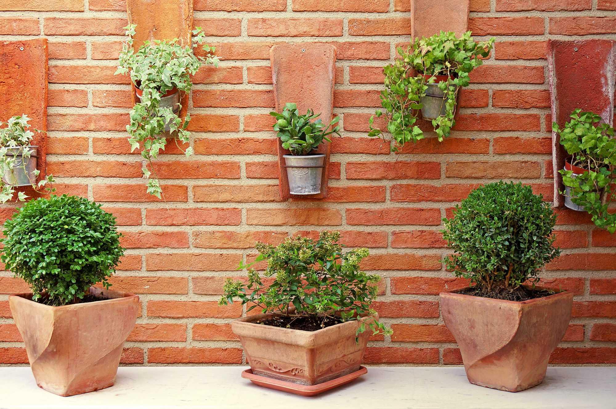 terracotta plante mur