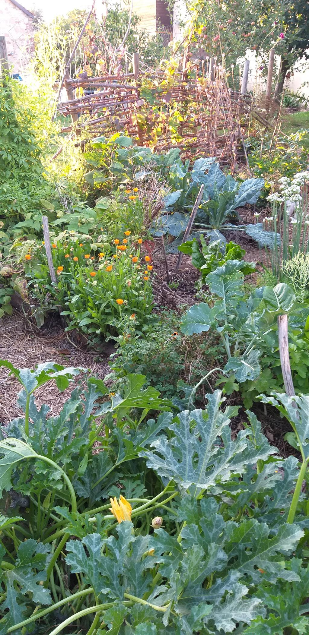 bloemen-sieren-de-moestuin-niet-alleen-op-ze-trekken-ook-veel-nuttige-insecten-aan-die-plaaginsecten-kunnen-indijken
