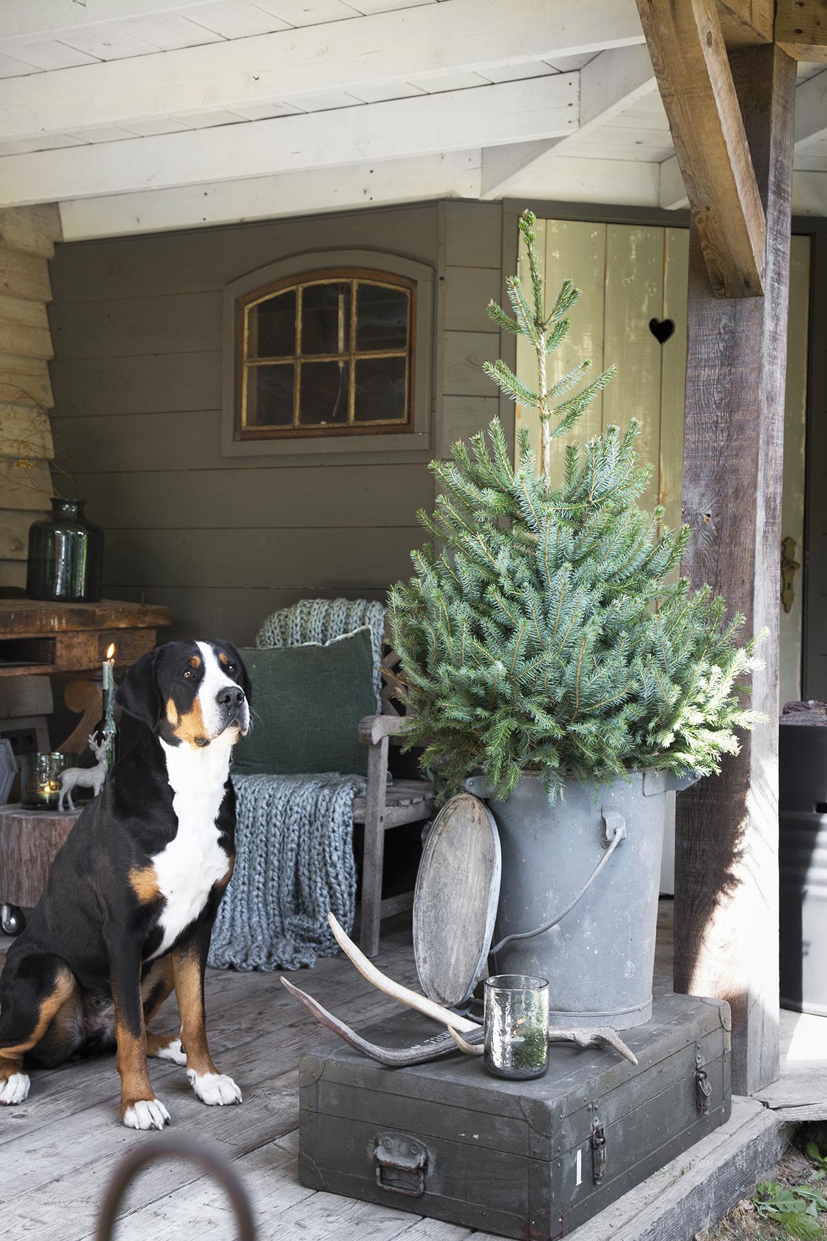 kerstboom plaatsen buiten zinken emmer