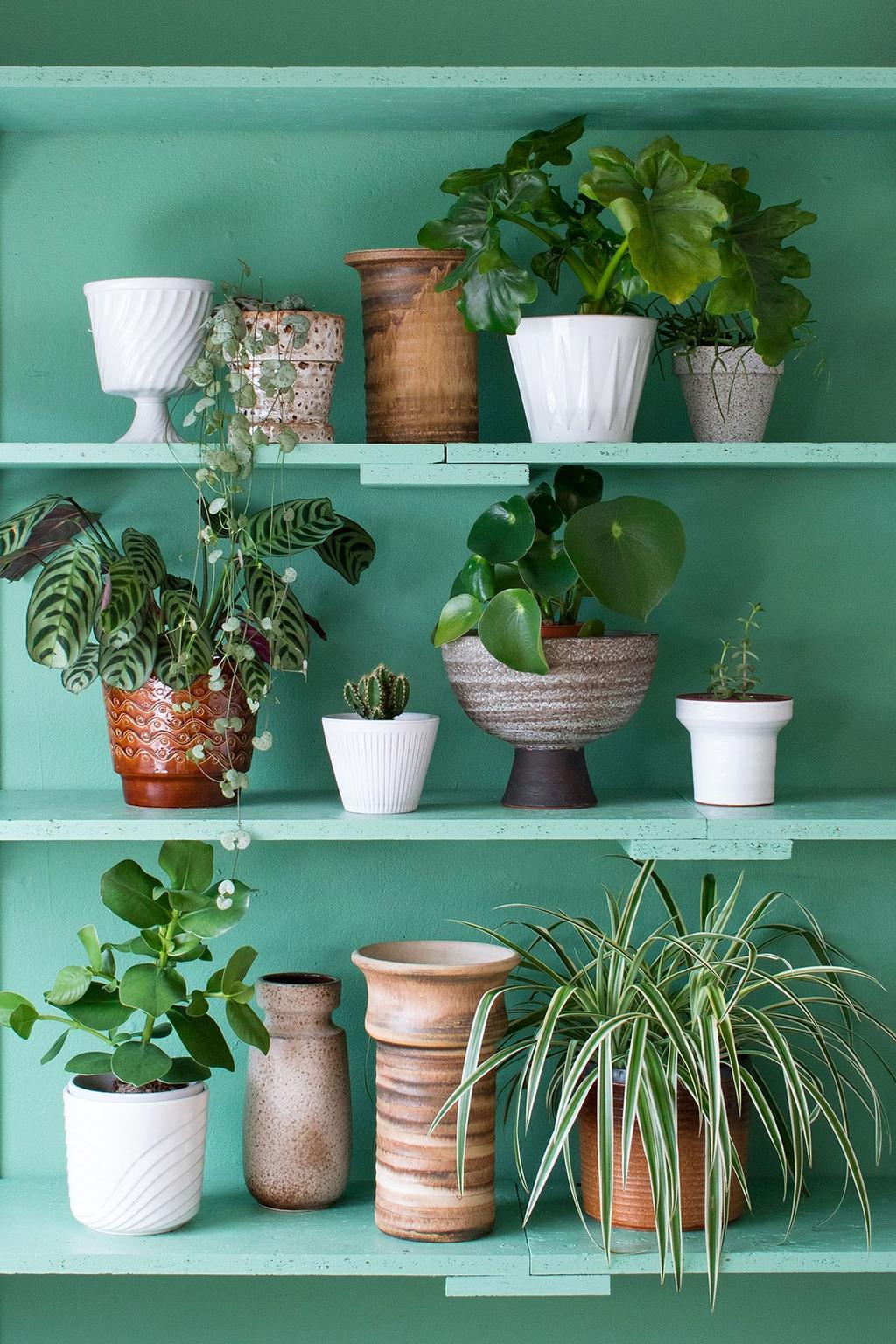 De plant shelfie van MY ATTIC met planten op groene planken