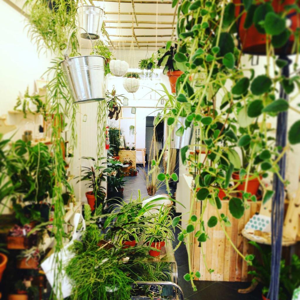 Hartenziel sfeer planten