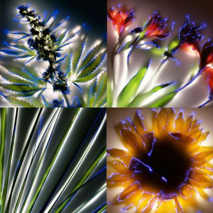 Elektrische planten