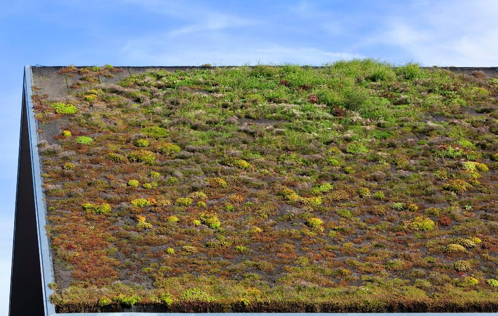 Groen en duurzaam dak met sedum
