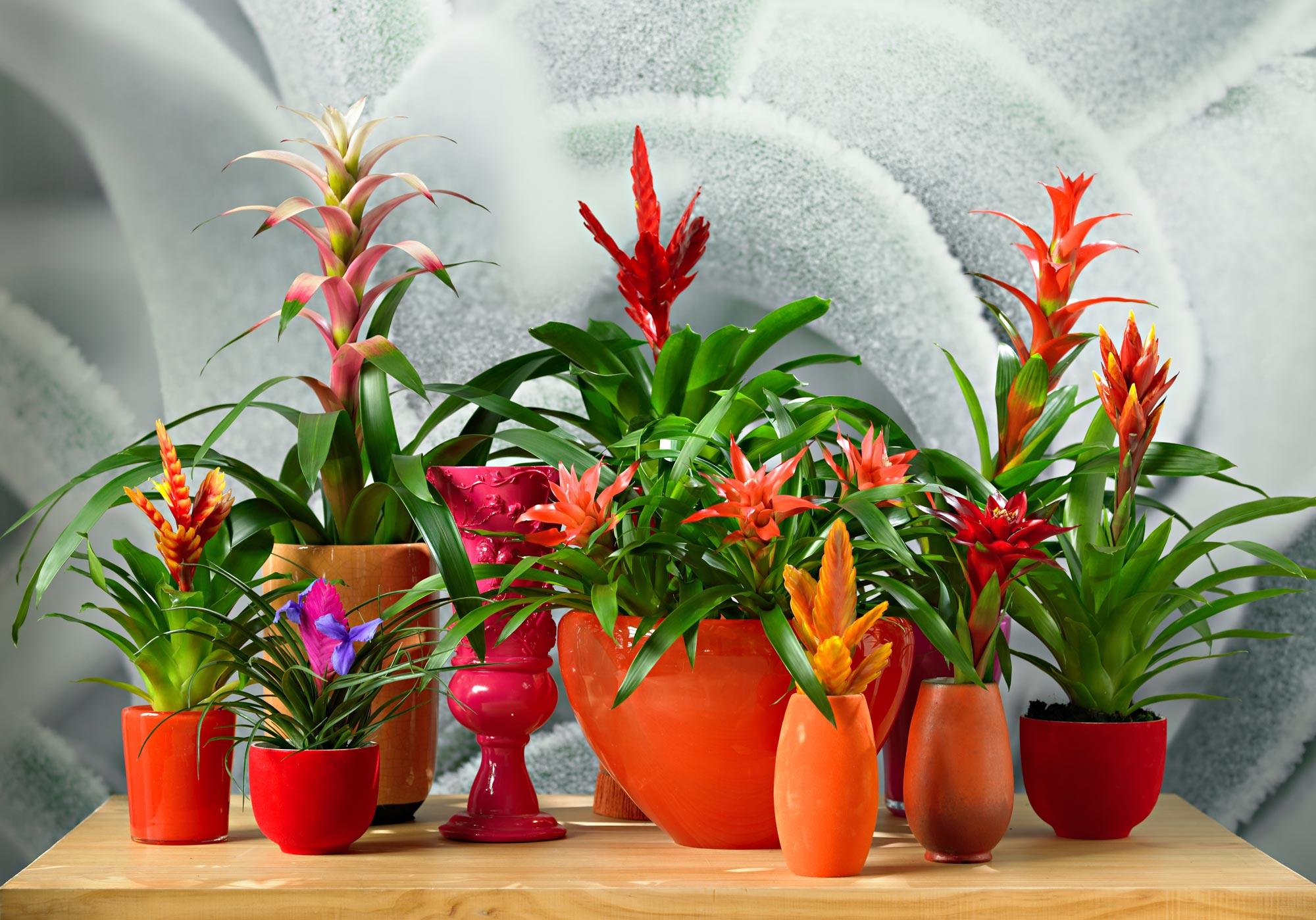 kleurrijke planten