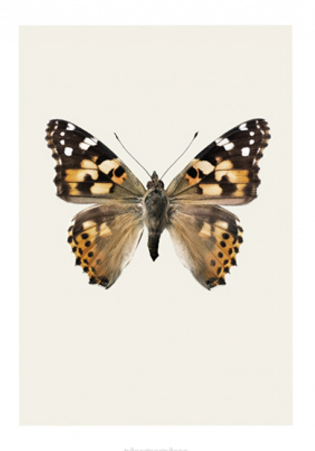 hagedornhagen-vlinder