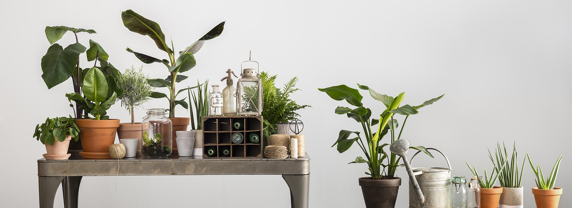 planten potten