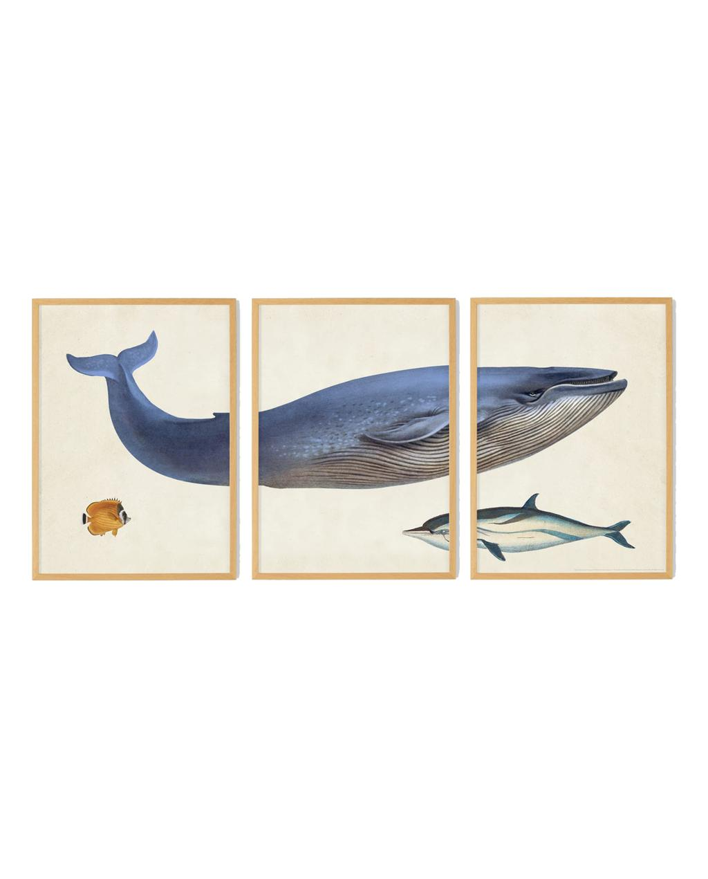 vtwonen juli 2021   set van 3 van een walvis