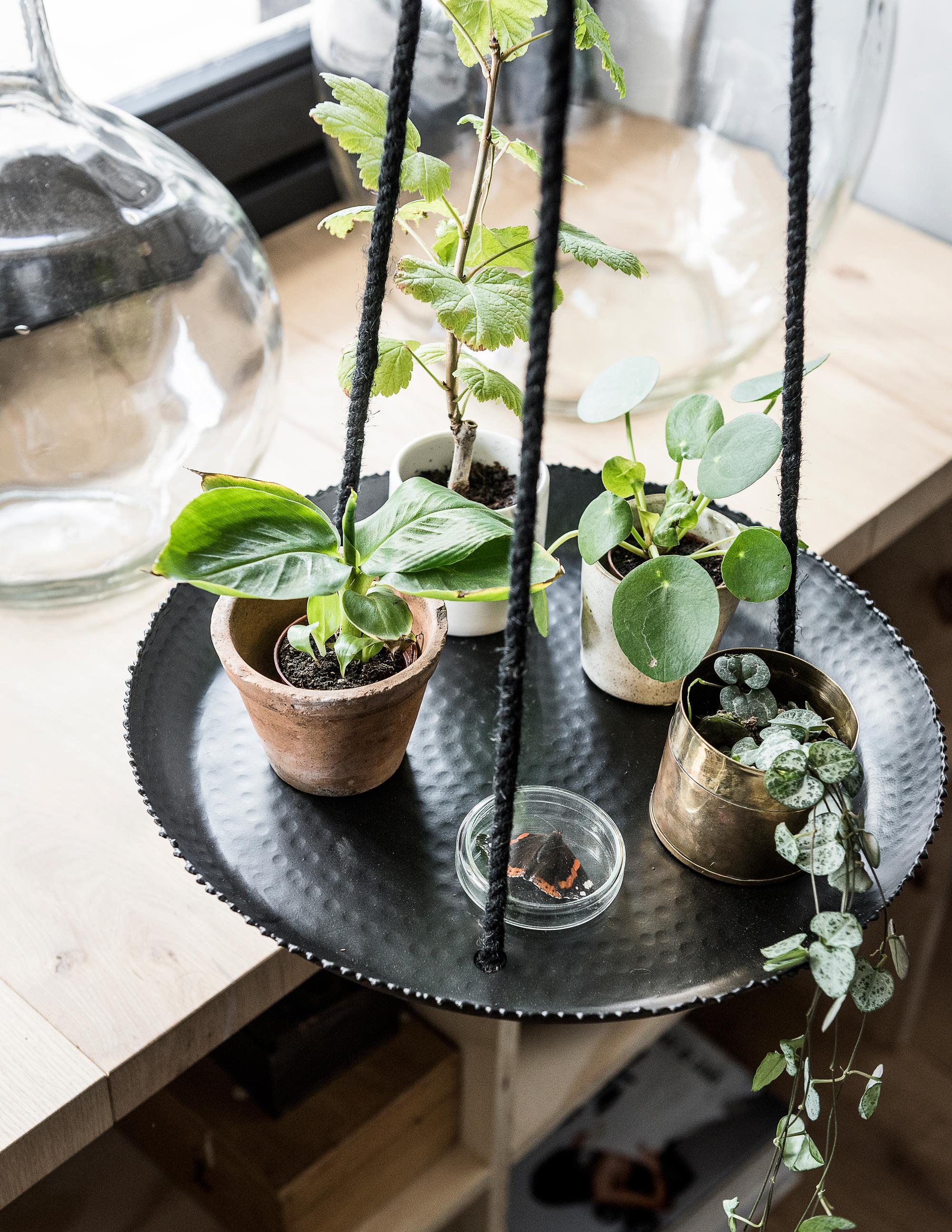 vtwonen plantenhanger