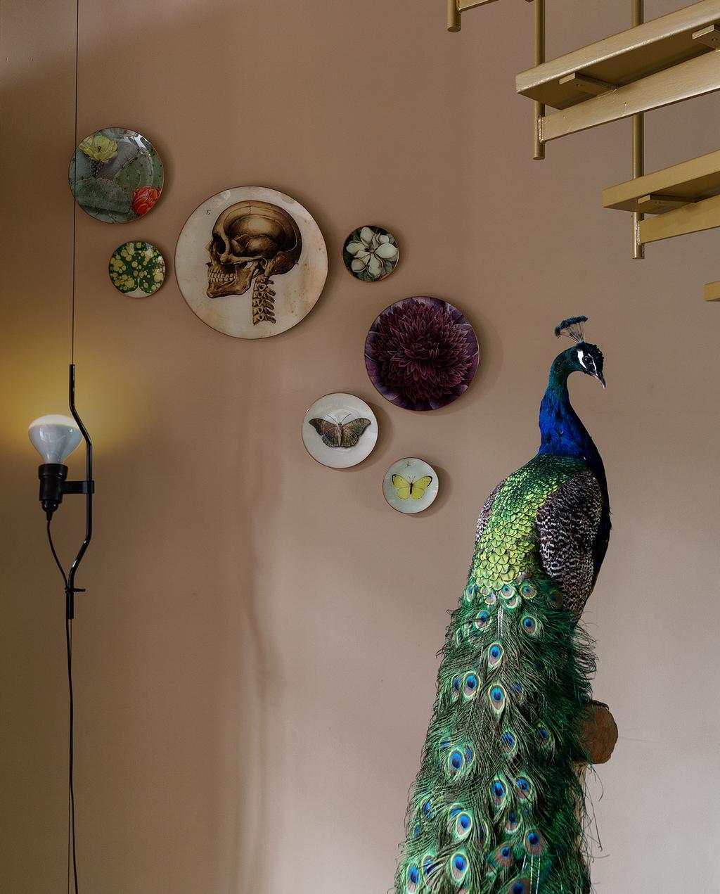 Pauw met decoratie borden