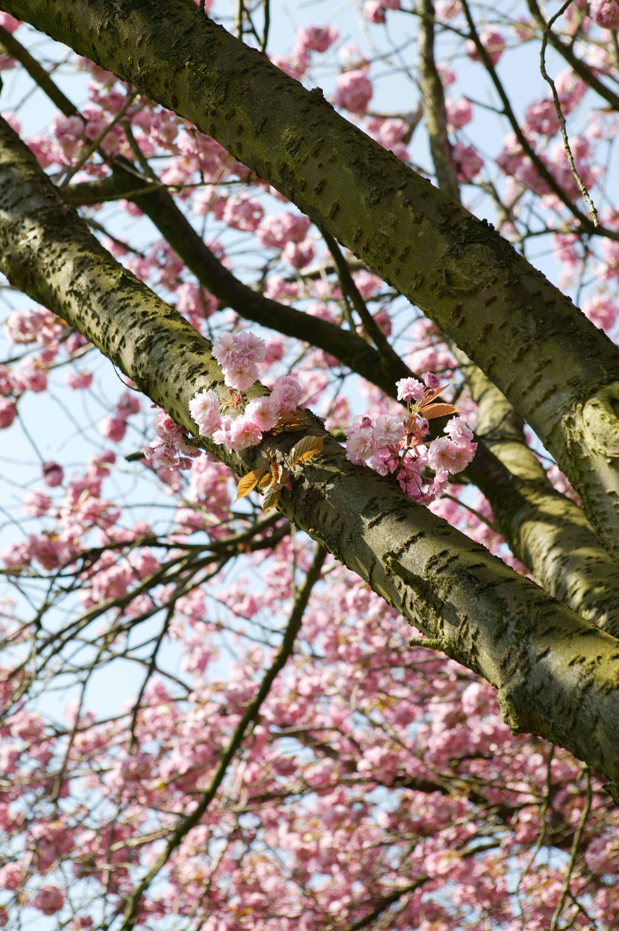 Bomen Voor In De Tuin.Boom In De Tuin Boom Kiezen En Planten Vtwonen