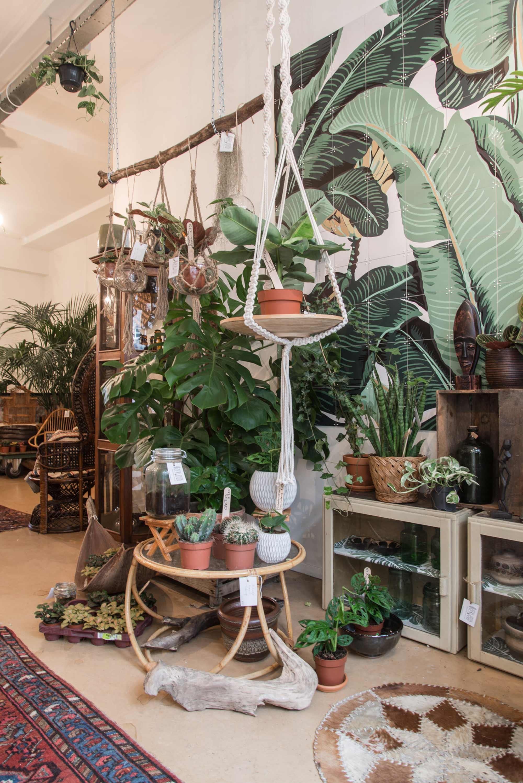 Planten OERWOUD Den Bosch
