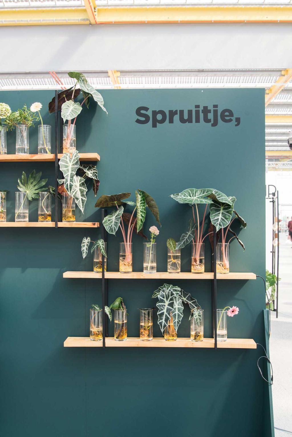 Planten van Spruitje, op showUP met REMADE with love