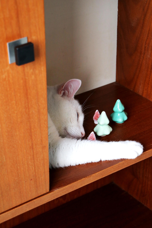 my attic kat in kast