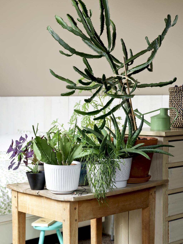 planten op tafel