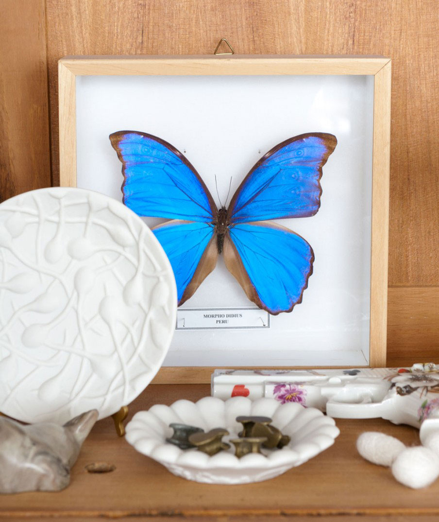 blauwe-vlinder-lijstje