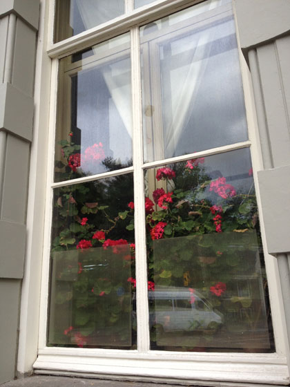 Pelargoniums achter raam