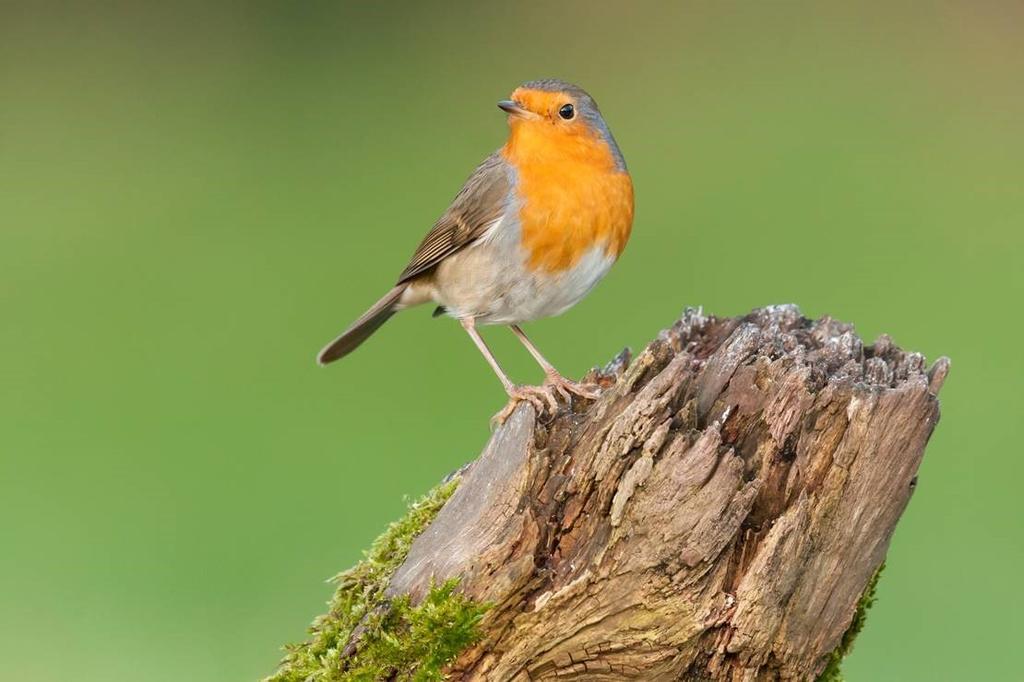 Vette vogelsnacks: handige tips - Roodborst - Blogger Kristel - vtwonen
