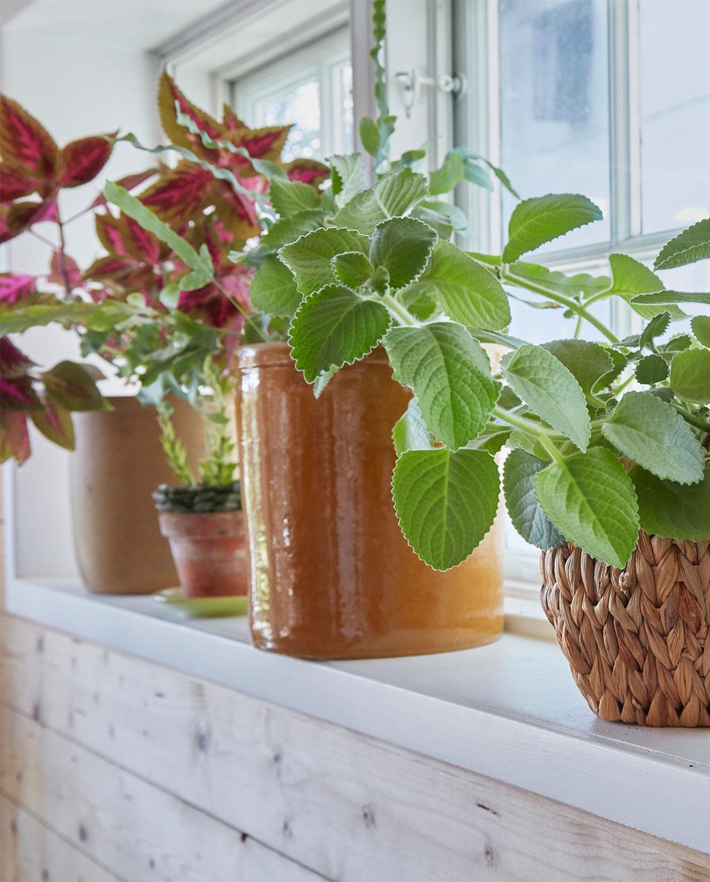 vtwonen special zomerhuizen 07-2021 | verschillende planten op de vensterbank
