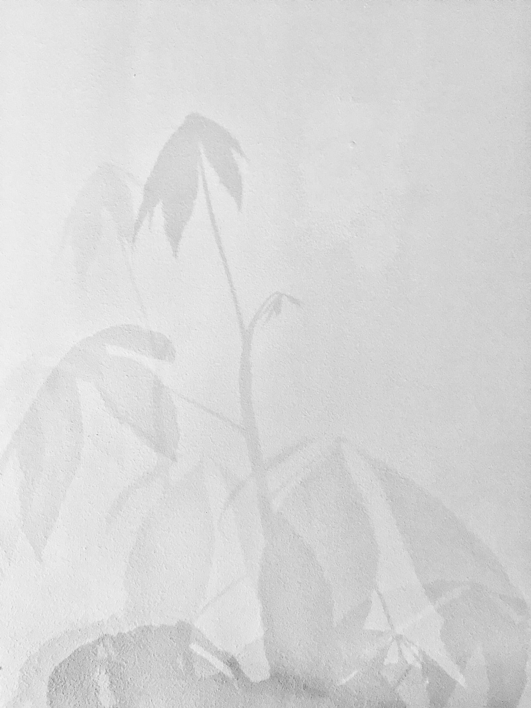 plant-afdruk