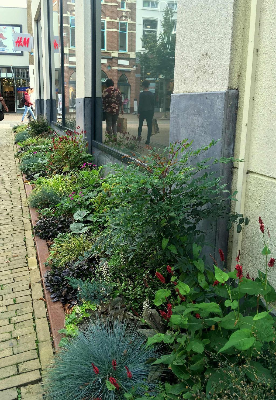 Geveltuintjes in de binnenstad van Zwolle