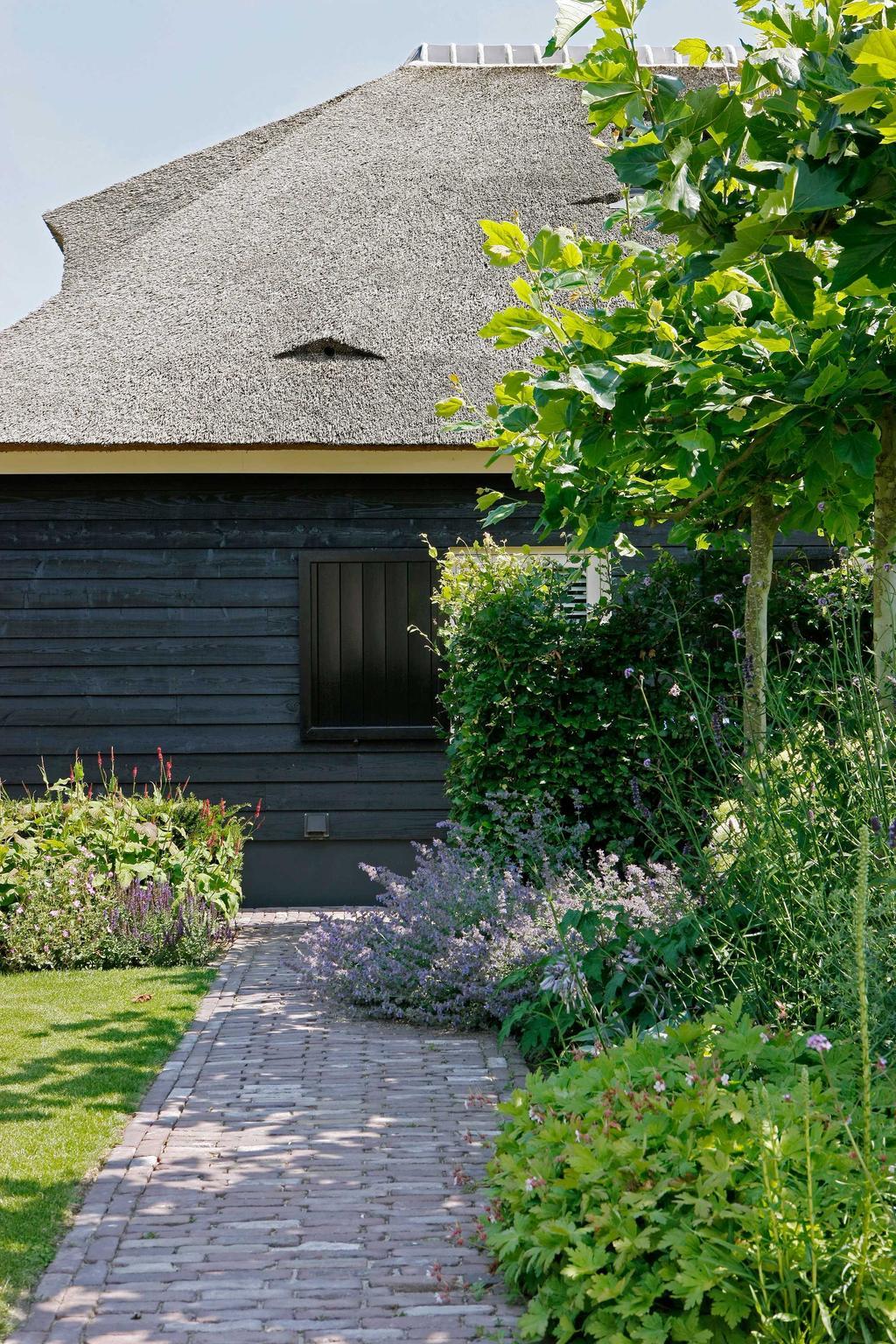 lavendel tuin