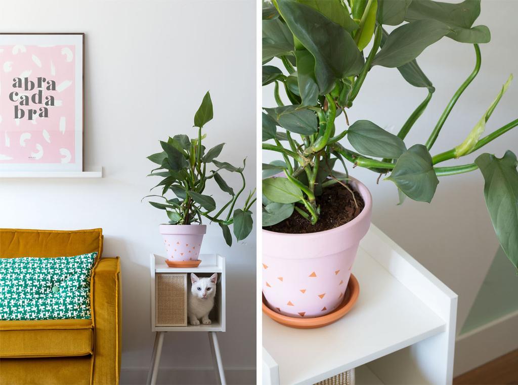 Kattenhuis en plantenstandaard voor Philodendron Hastatum
