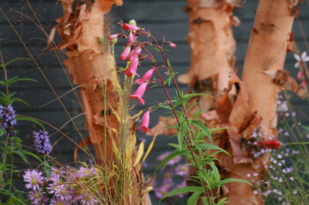 Blog vtwonen Kristel Engelen Meerstammige bomen Huibelco
