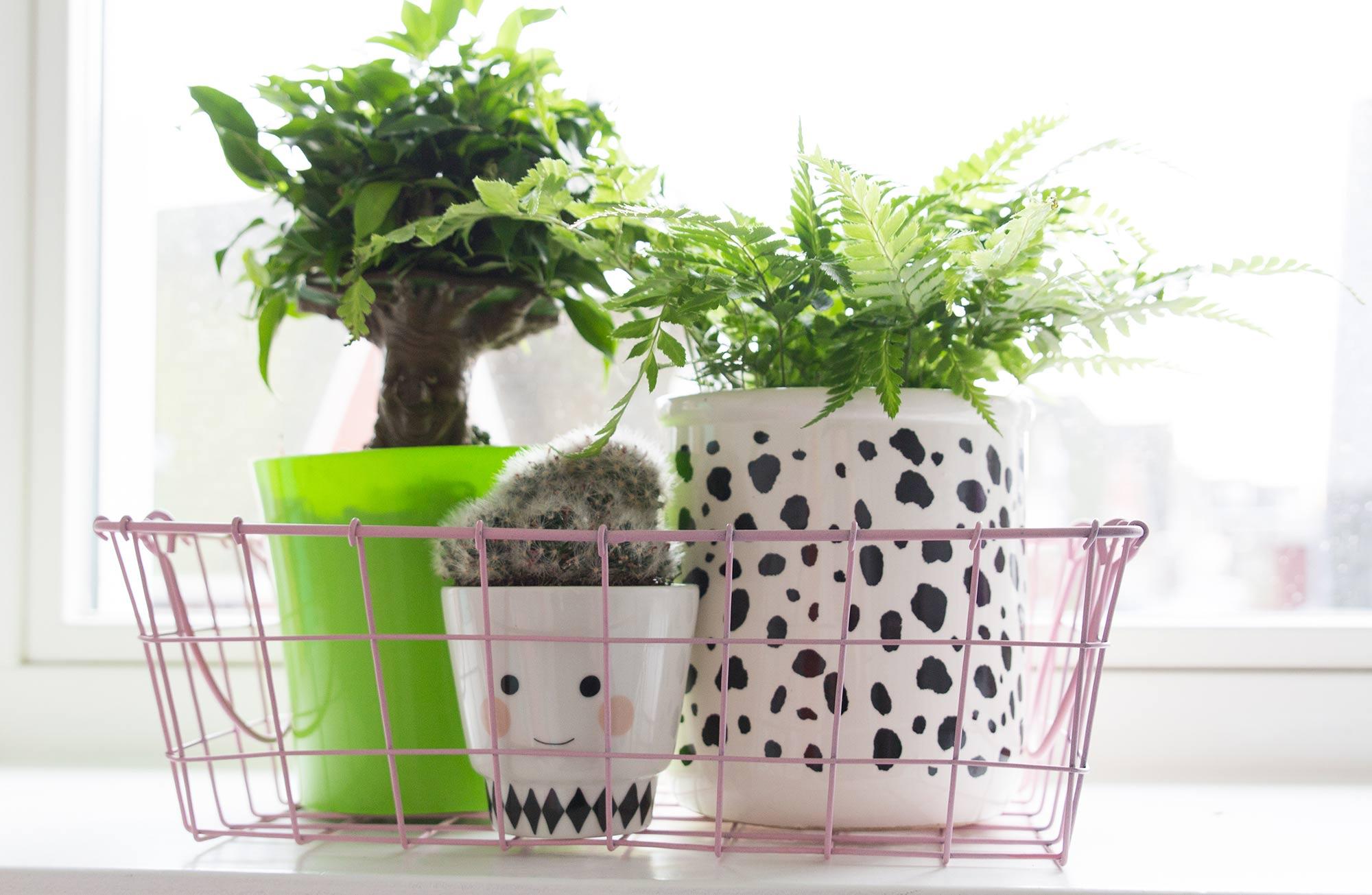 Plantjes in de kinderkamer