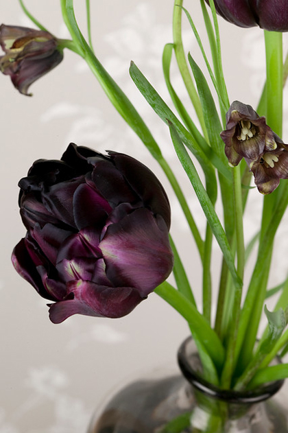 zwarte-tulpen