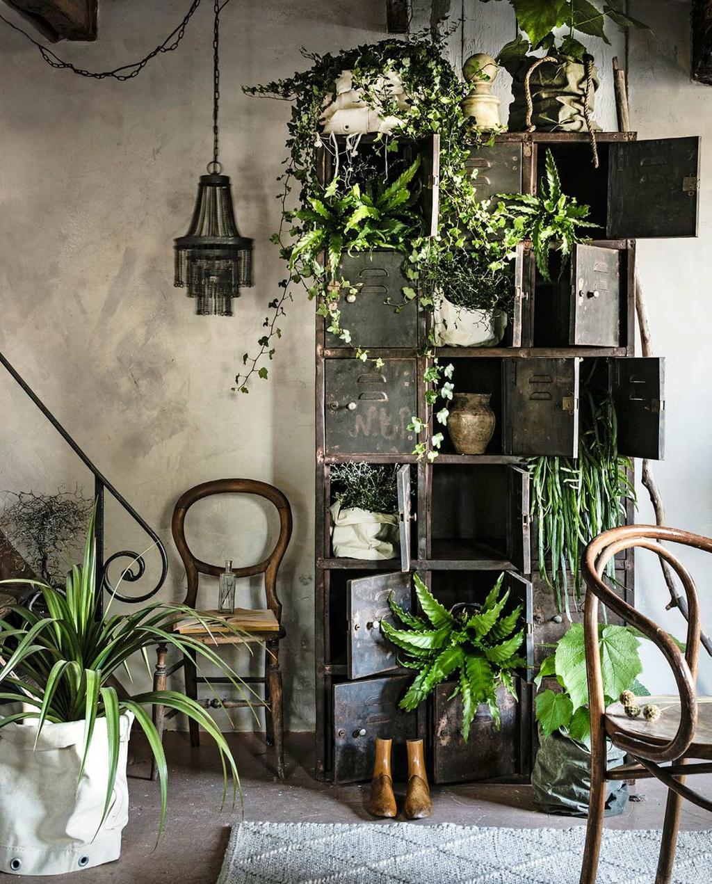 planten locker plantenspuit urban jungle