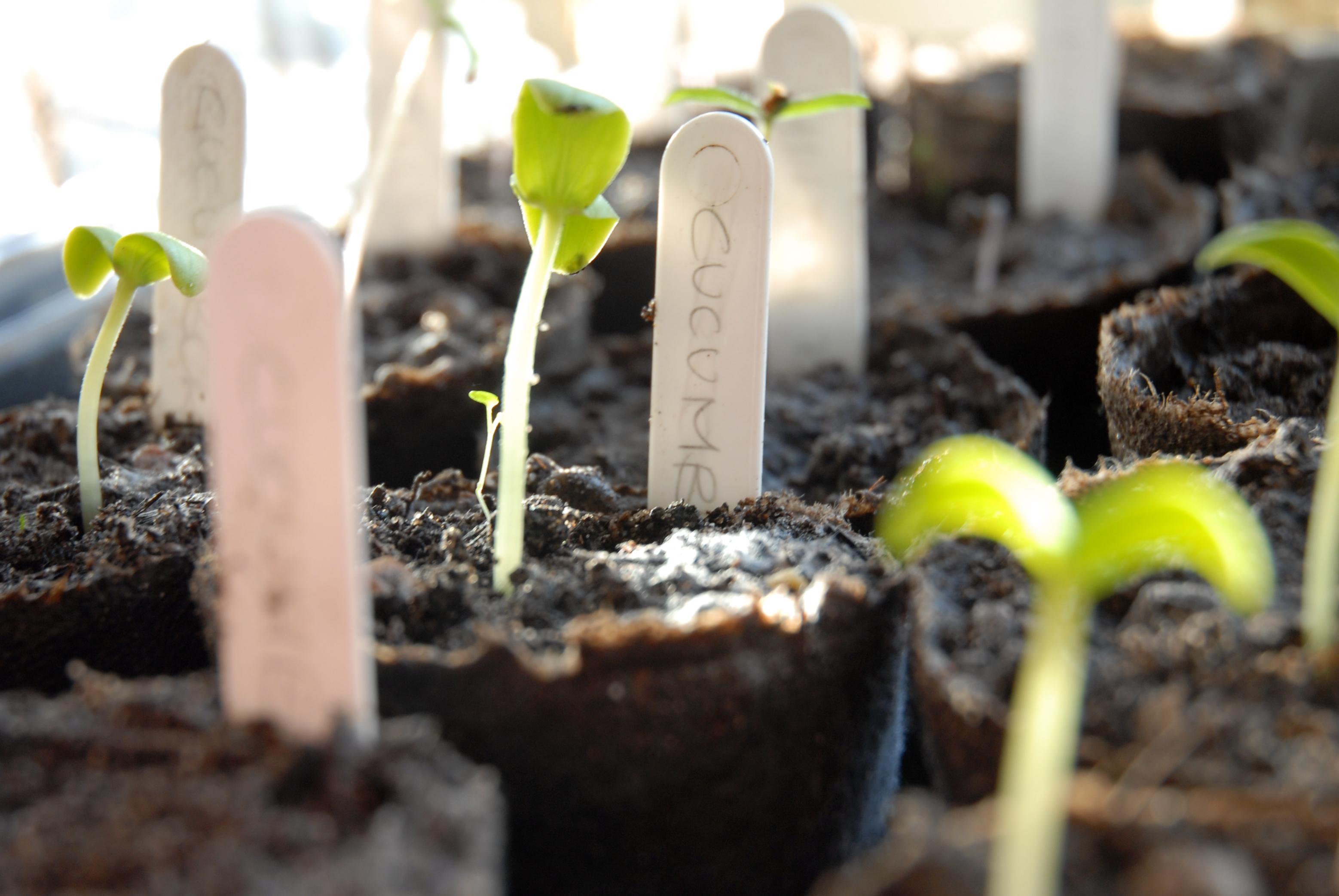 tuinblog groenteuitedegem volkstuin