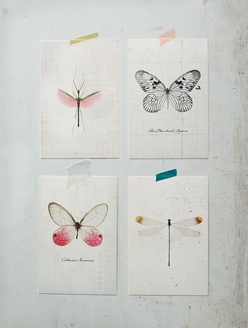 insecten aan de muur