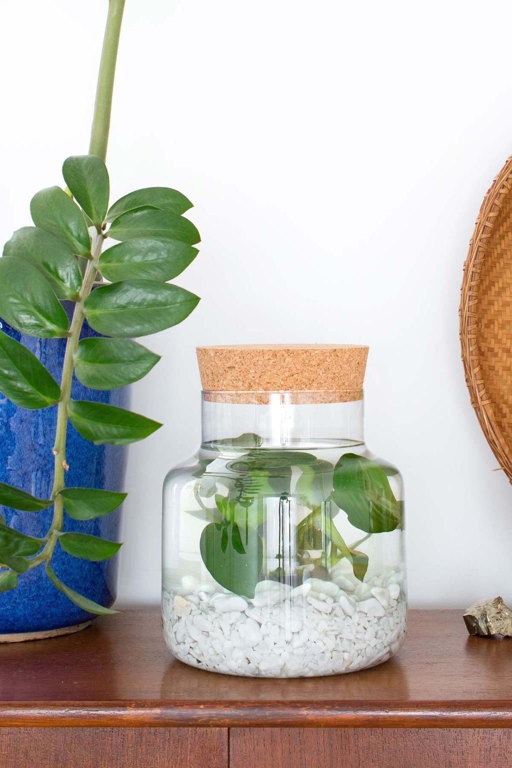 Onderwatertuin: waterplant in een weckpot