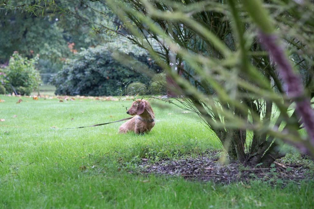 boerderij tuin hond