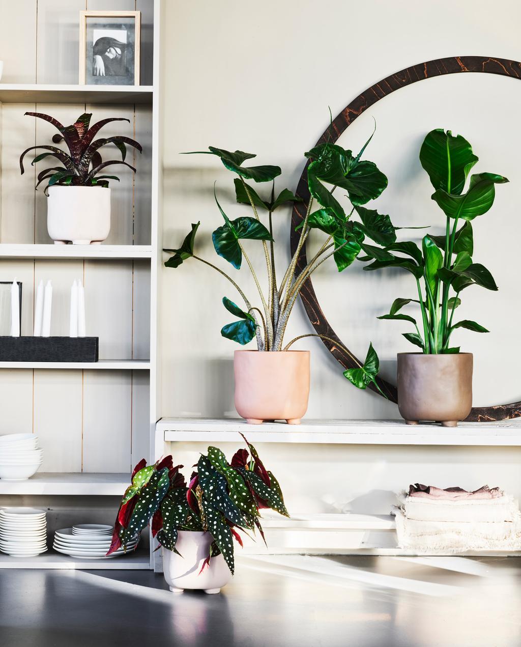 vtwonen pot en plant collectie in boekenkast