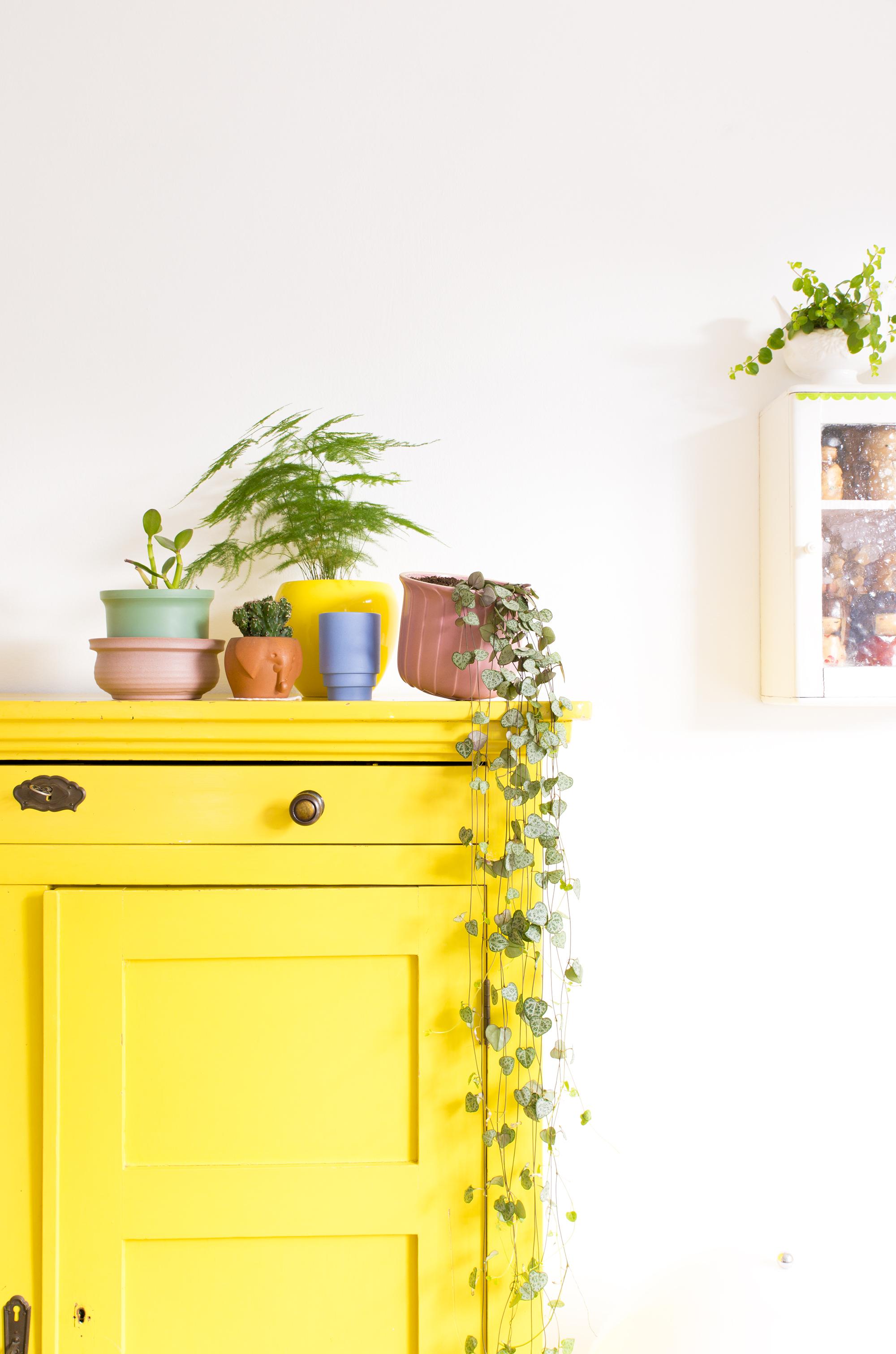 Bloempot en planten op gele kast