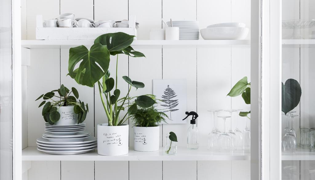 vtwonen plant en pot exclusief bij Albert Heijn