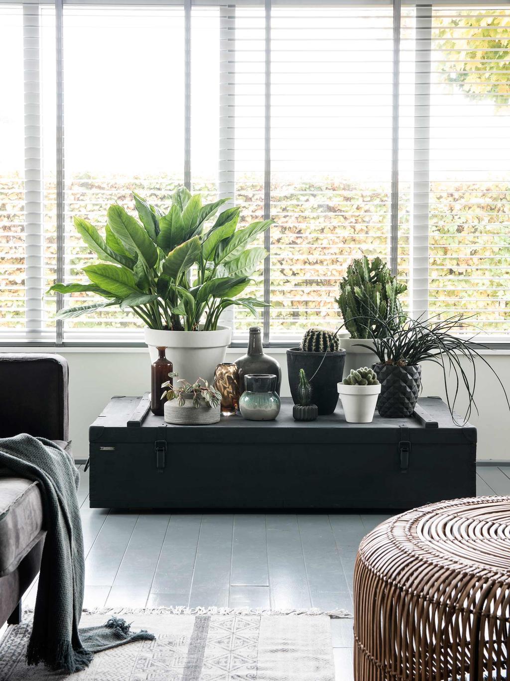 vieux coffre noire avec plantes