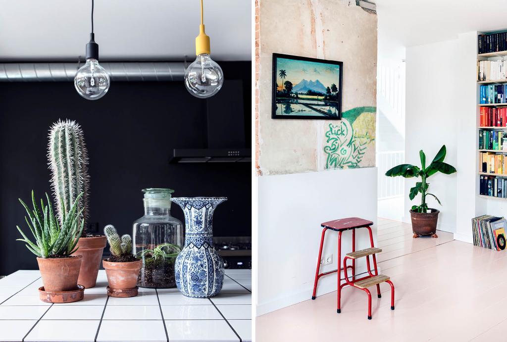 Plantenverzameling in de zwarte keuken
