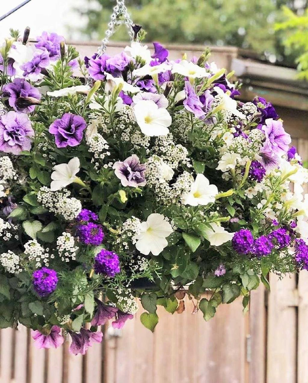 vtwonen blog kristel | hanging baskets paars en witte bloemen