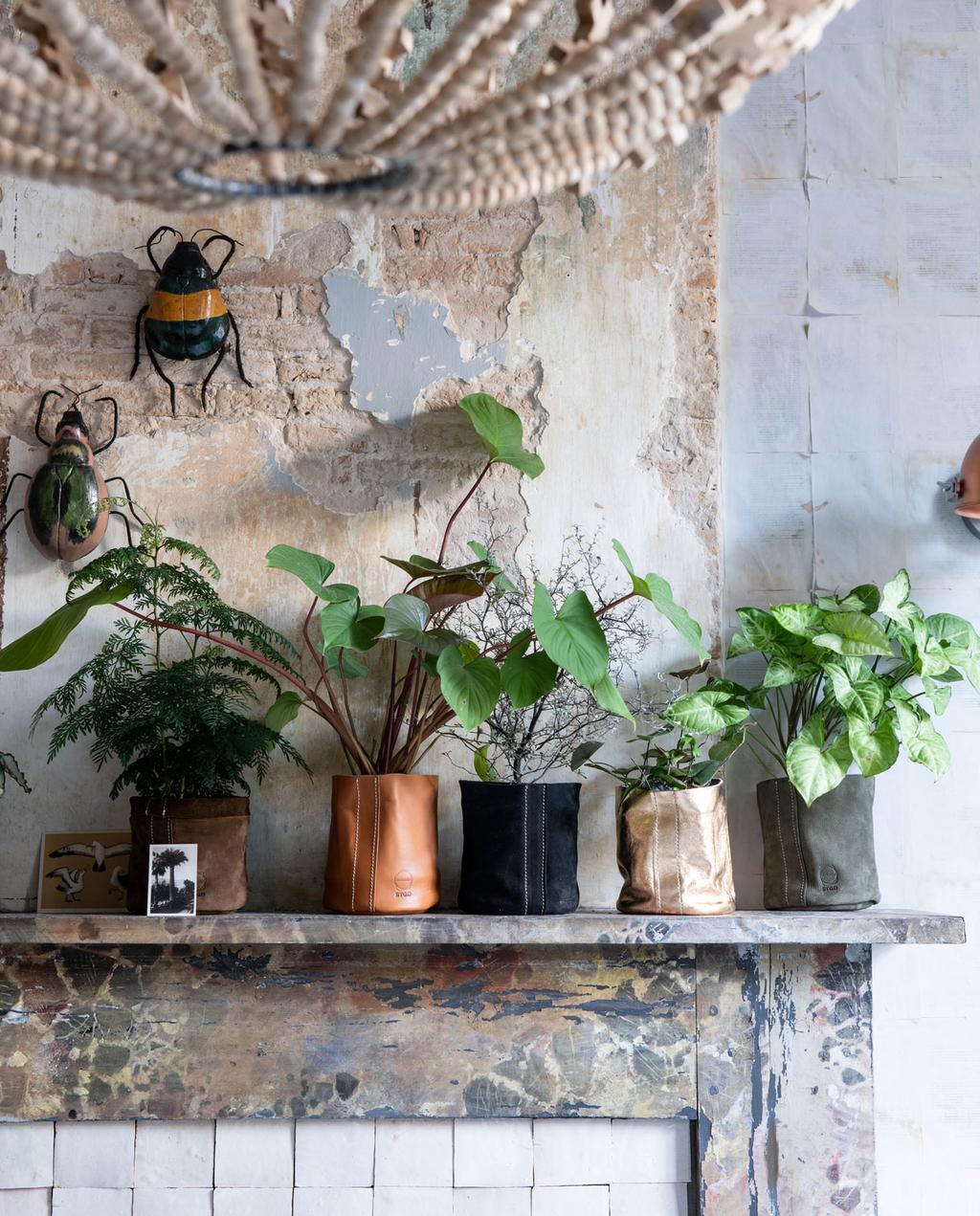 vtwonen 11-2019 | binnenkijker s'Gravenmoer schouw planten