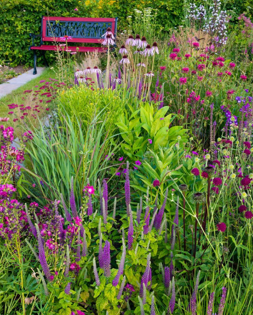 vtwonen blog kristel | prairiebeplanting rood en paarse bloemen