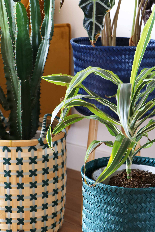 planten voorjaarshuis blogger my attic