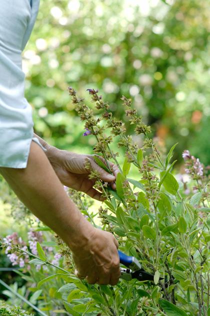 planten Stekken maken