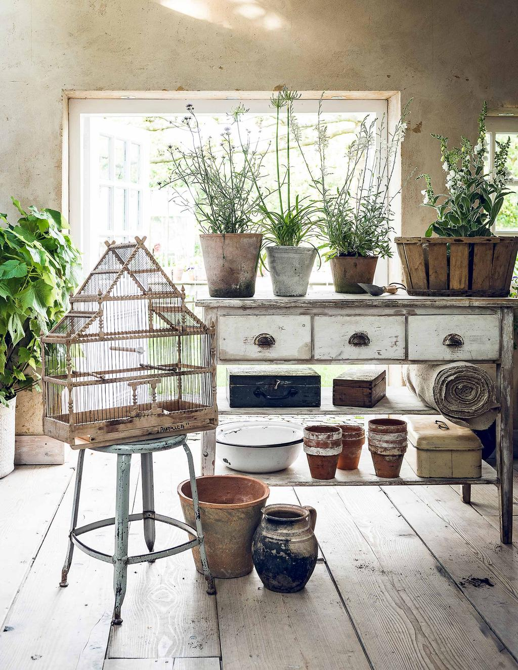 vieux buffet avec plantes et cage