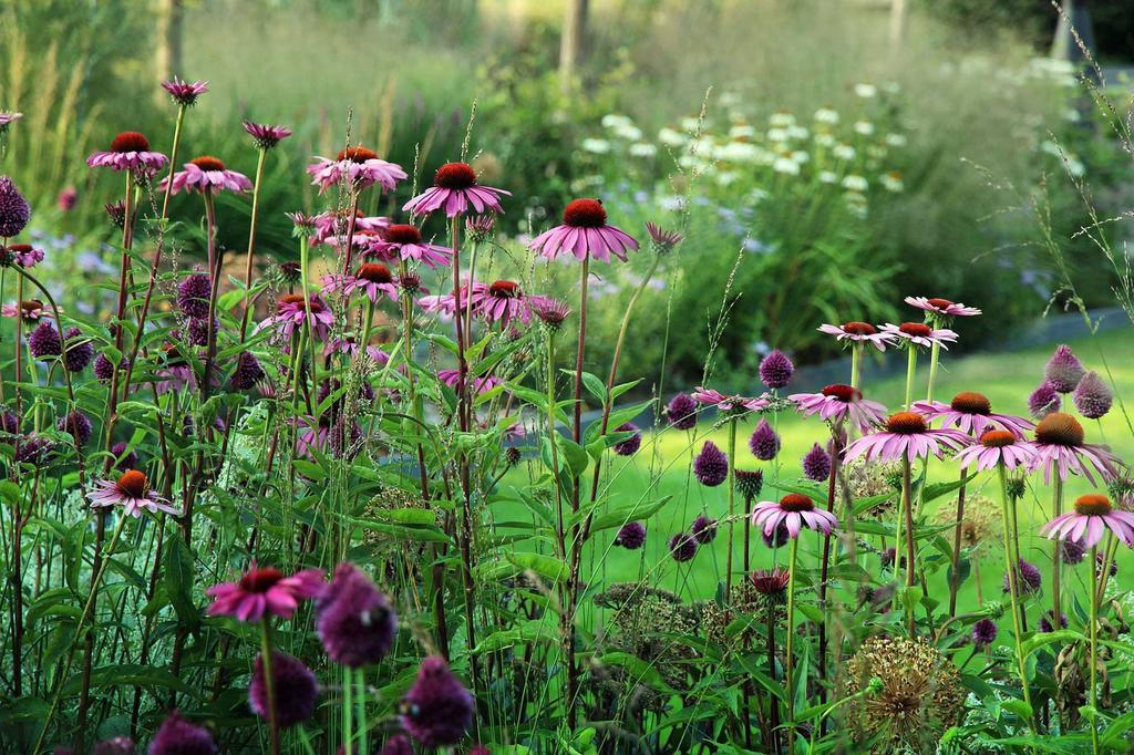 parterre fleurs mauve