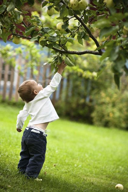Appelboom Kopen