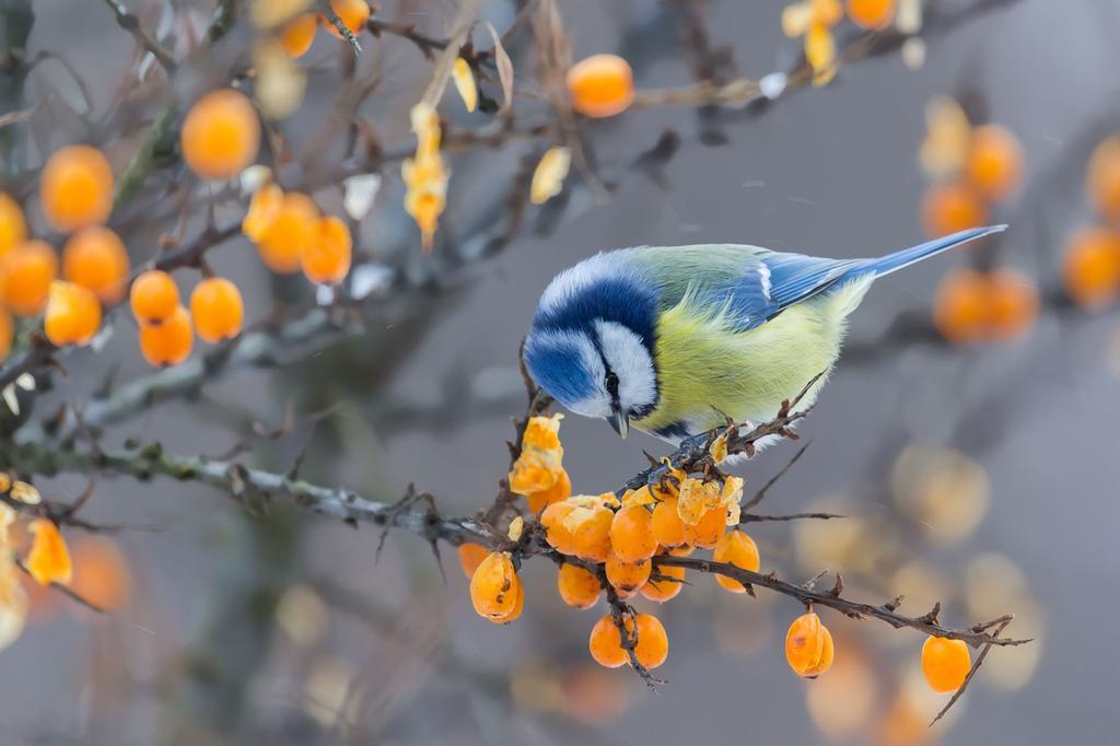 Tuinvogels tellen blogger Kristel pimpelmees